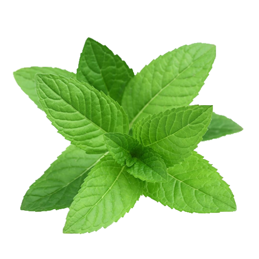 Picture of Mint Leaf - 100 gm