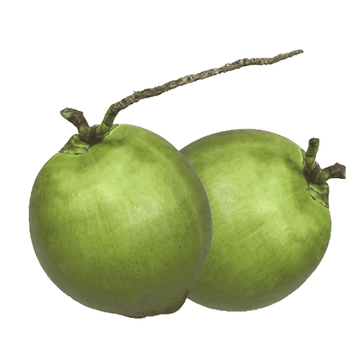 Picture of Green Coconut - 1 pc