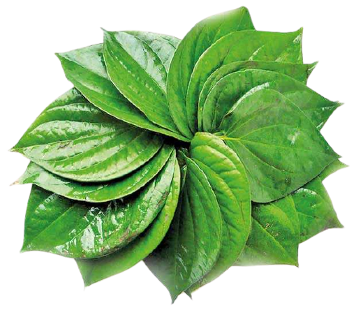 Picture of Betel Leaf (Paan) - 40 pcs