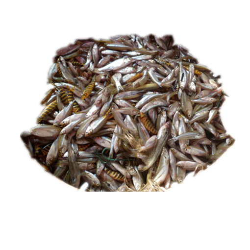 Picture of Nodir Panch Mishali Fish  - 1 kg
