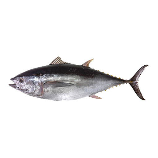 Picture of Tuna - 1 kg